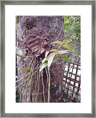 Bordoloi Framed Print by Jayanta Bordoloi