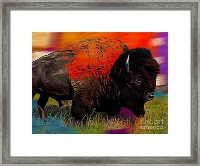 Buffalo Collection Framed Print