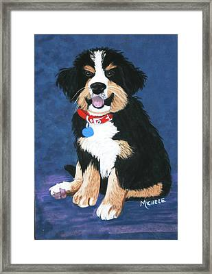 Burmese Mountain Pup Framed Print by Michele Turney