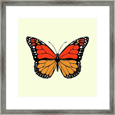 Butterfly Framed Print by Gaspar Avila