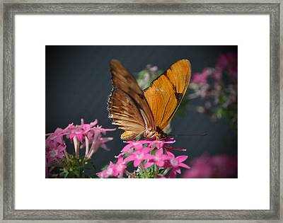 Framed Print featuring the photograph Butterfly by Savannah Gibbs