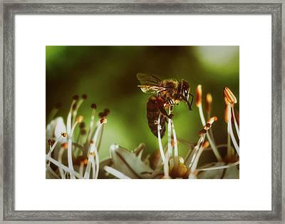Framed Print featuring the photograph Bzzz by Michael Siebert
