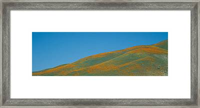 California Poppies And Wildflowers Framed Print by Panoramic Images