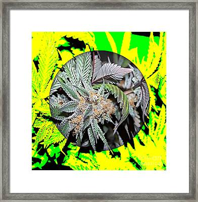 Cannabis 420 Collection Framed Print by Marvin Blaine