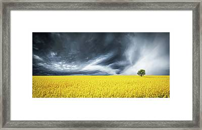 Canola Field Framed Print by Bess Hamiti