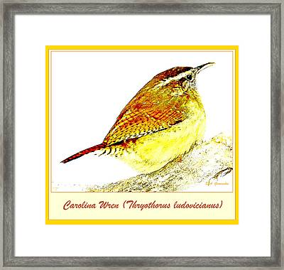 Carolina Wren Animal Portrait Digital Art Framed Print by A Gurmankin