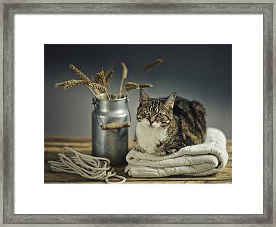 Cat Portrait Framed Print by Nailia Schwarz