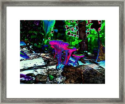 Chanterelles In The Ozarks Framed Print by Catherine McCoy