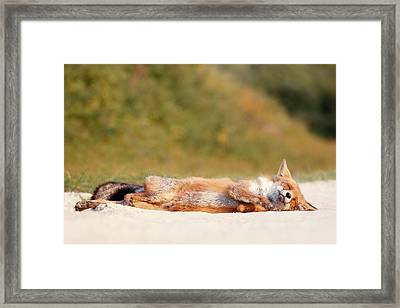 Chill Fox Framed Print by Roeselien Raimond