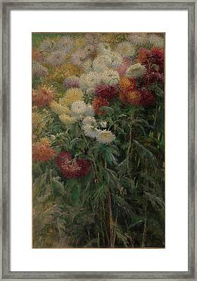 Chrysanthemums In The Garden At Petit-gennevilliers Framed Print by Gustave Caillebotte