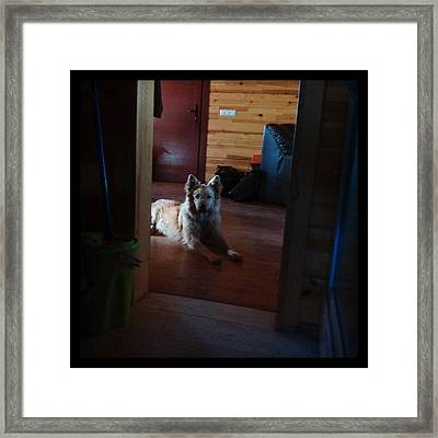 Chuvak #dog #animal #pet #portrait Framed Print
