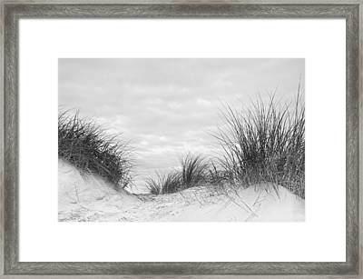 Close Up Detail Of Marram Grass On Sand Dune In Black And White Framed Print