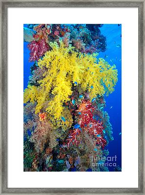 Coral, Close-up Framed Print by Dave Fleetham - Printscapes