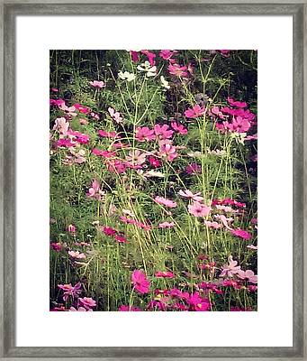 Cosmos Flowers  Framed Print by Sobajan Tellfortunes