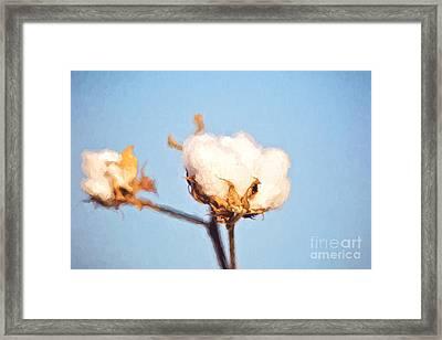 Cotton Boll - Digital Painting Framed Print
