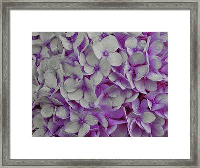 Cotton Candy Framed Print by JAMART Photography