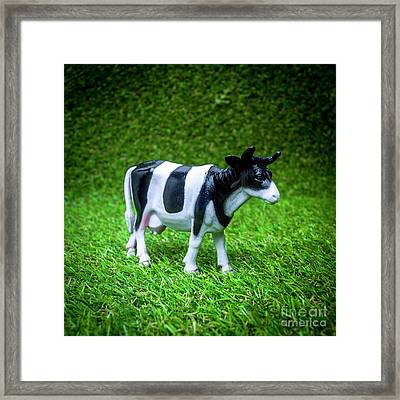 Cow Figurine Framed Print by Bernard Jaubert