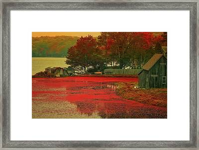 Cranberry Farm Framed Print
