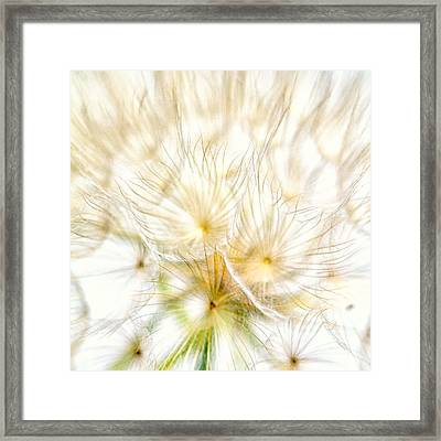 Dandelion Framed Print by Stelios Kleanthous