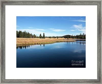 Dead Pond Framed Print by Michal Boubin