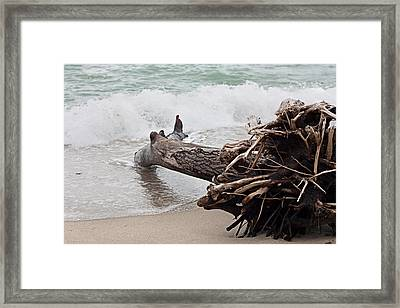 Dead Tree Framed Print by Boyan Dimitrov