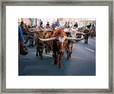 Denver National Western Stock Show Kick-of Parade 2018 Framed Print