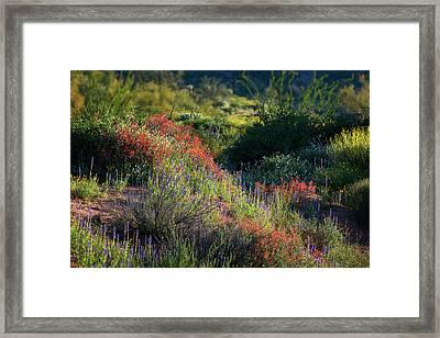 Framed Print featuring the photograph Desert Wildflowers  by Saija Lehtonen