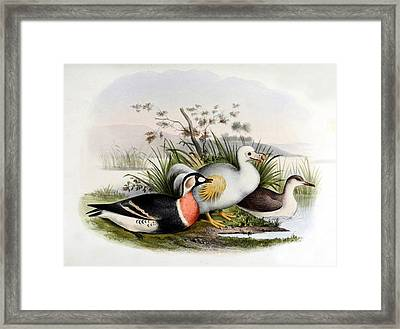 Dodo Bird, Hunted To Extinction Framed Print by Biodiversity Heritage Library