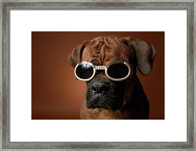 Dog Wearing Sunglasses Framed Print by Chris Amaral