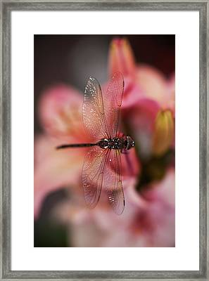 Dragonfly Serenity Framed Print by Mike Reid