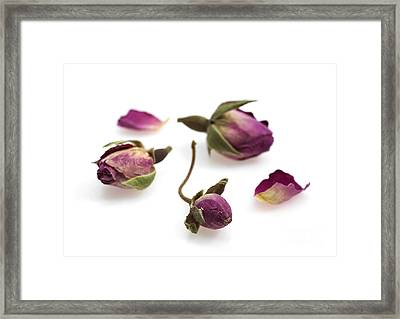 Dried Rosebuds Framed Print by Gerard Lacz