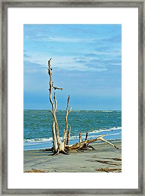 Driftwood On Beach Framed Print by Bill Barber