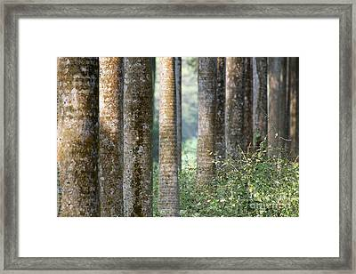 Dry Leaves And Trees Moody Winter Tree Roots Backlground Framed Print by Rudra Narayan Mitra