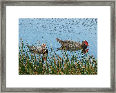 Framed Print featuring the photograph 2- Ducks by Joseph Keane