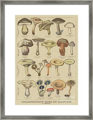 Edible And Poisonous Mushrooms Framed Print by French School
