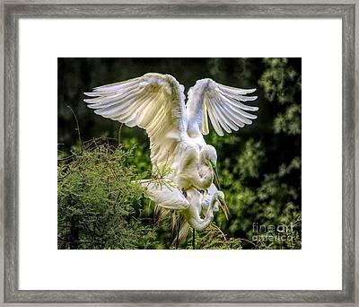 Egret Love Framed Print