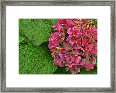 Endless Summer Framed Print by JAMART Photography