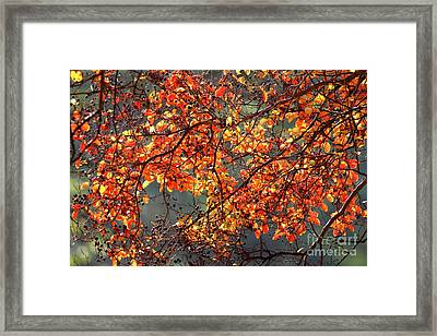 Framed Print featuring the photograph Fall Leaves by Nicholas Burningham