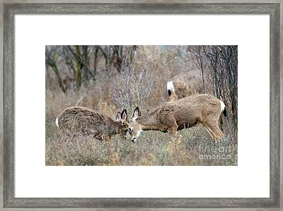 Family Time Framed Print by Mike Dawson