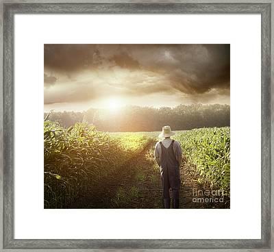 Farmer Walking In Corn Fields At Sunset Framed Print