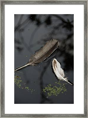 Surface Deep Framed Print by Marilyn Wilson