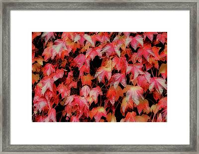 Fiery Foliage Framed Print by JAMART Photography