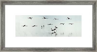 Flamingos In A Lake, Lake Manyara Framed Print