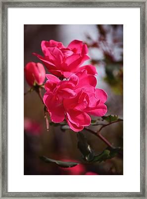 Flora No. 2 Framed Print