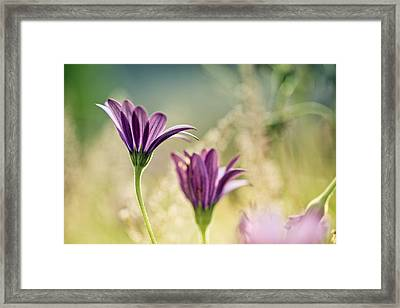 Flower On Summer Meadow Framed Print