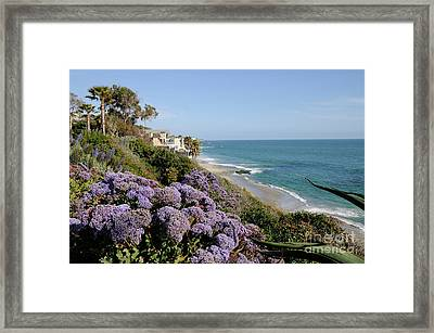 Flowers At The Beach Framed Print by Timothy OLeary