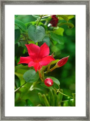 Framed Print featuring the photograph Flowers by Bernd Hau