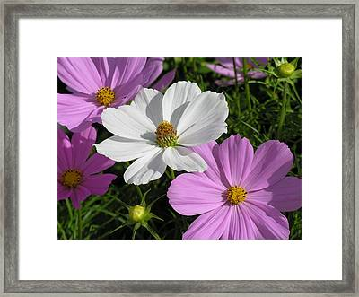 Flowers Framed Print by Diane Greco-Lesser