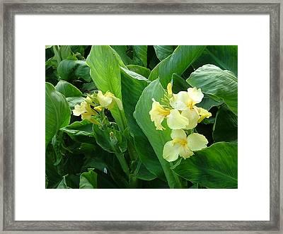 Flowers Framed Print by Rita Fetisov