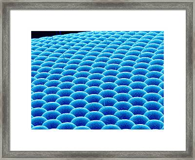 Fly Compound Eye, Sem Framed Print by Susumu Nishinaga